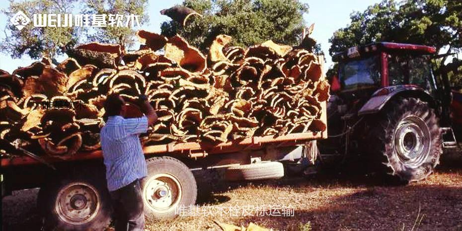 唯基软木栓皮栎运输
