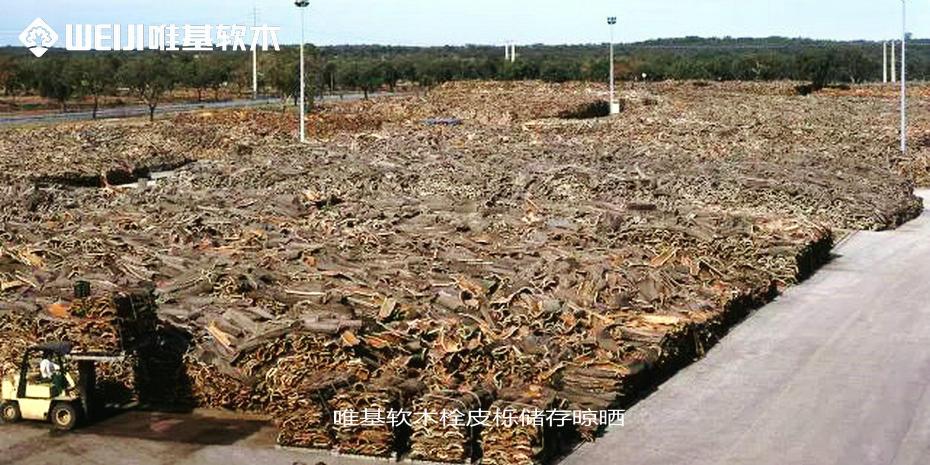 唯基软木栓皮栎储存晾晒